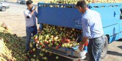 بیش از ۴۰۰ هزار تن سیب روی دست باغداران مانده است/باغداران در صف فروش سیب